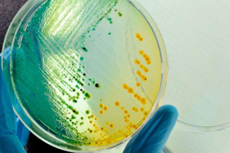 Se reduce la resistencia a antibióticos en los Estados Unidos