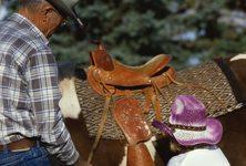 Montar a caballo podría mejorar la función en la fase tardía de recuperación tras un accidente cerebrovascular